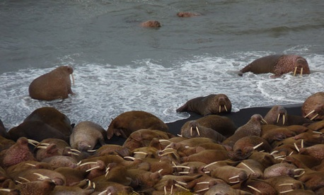 Sea ice has been decreasing in places like Alaska's Becharof National Wildlife Refuge.