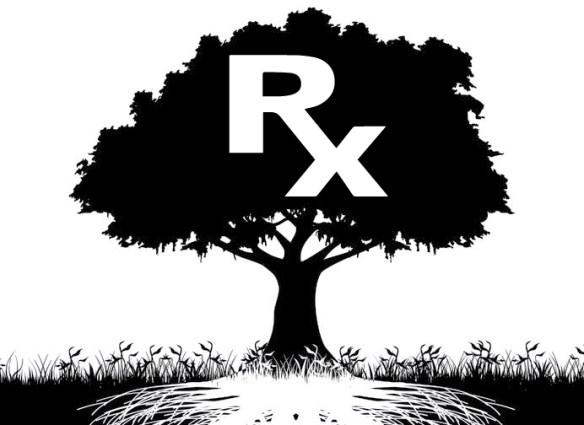 The Powerful Aspirin Alternative That Grows On Trees