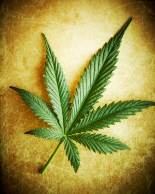 Marijuana May Be Far Superior To Drugs For Alzheimer's