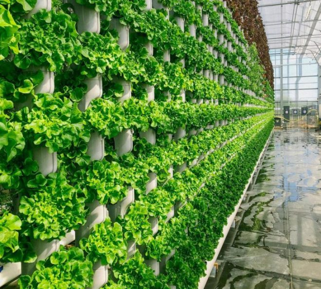 The World S Most Advanced Vertical Farm Opens The Green Optimistic