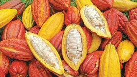 Image result for Cocoa exporters decry non-implementation of policy