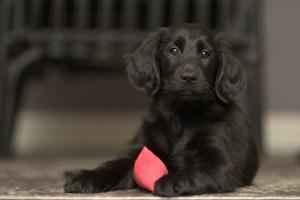 Hundefutterbeutel robustes Material