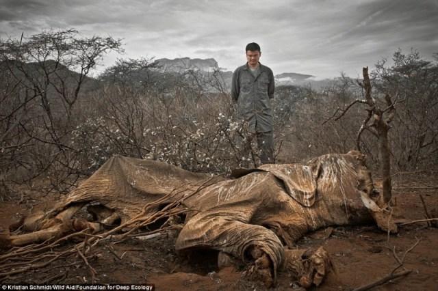 elefante-cazadores