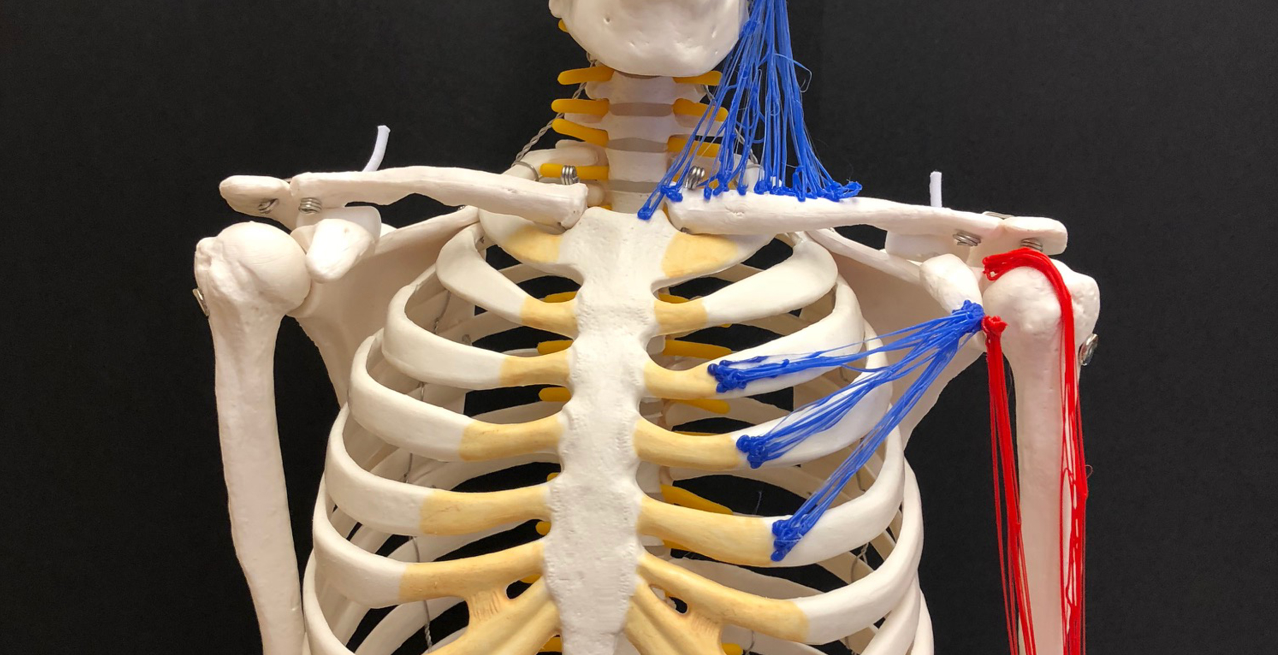 Teaching College Anatomy And Physiology With Tactile