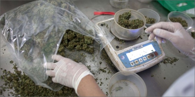 medical scales Latest Studies Confirm Medical Marijuana Is Safe Long Term