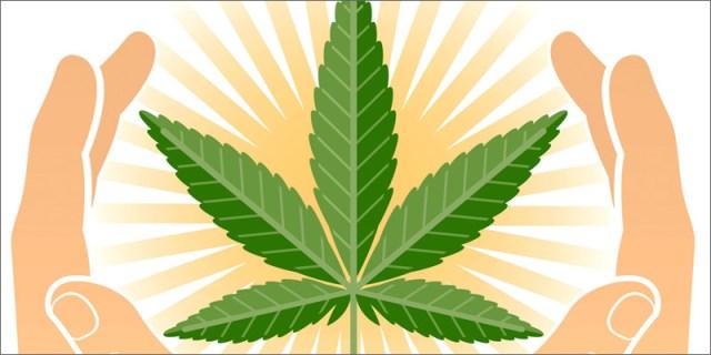 medical weed hands Latest Studies Confirm Medical Marijuana Is Safe Long Term