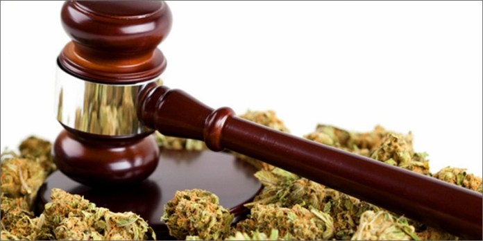 legal 21 Shocking Weed Facts That Will Make You Say OMG