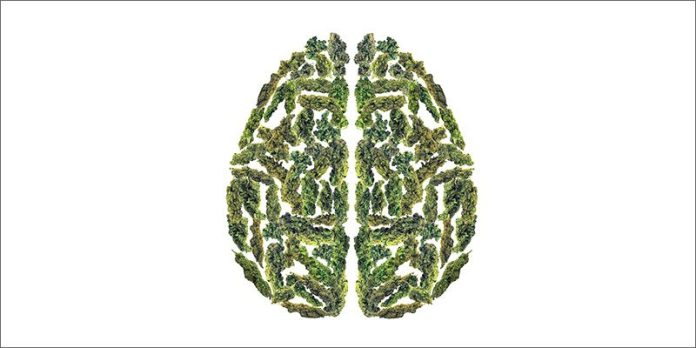 brain 21 Shocking Weed Facts That Will Make You Say OMG