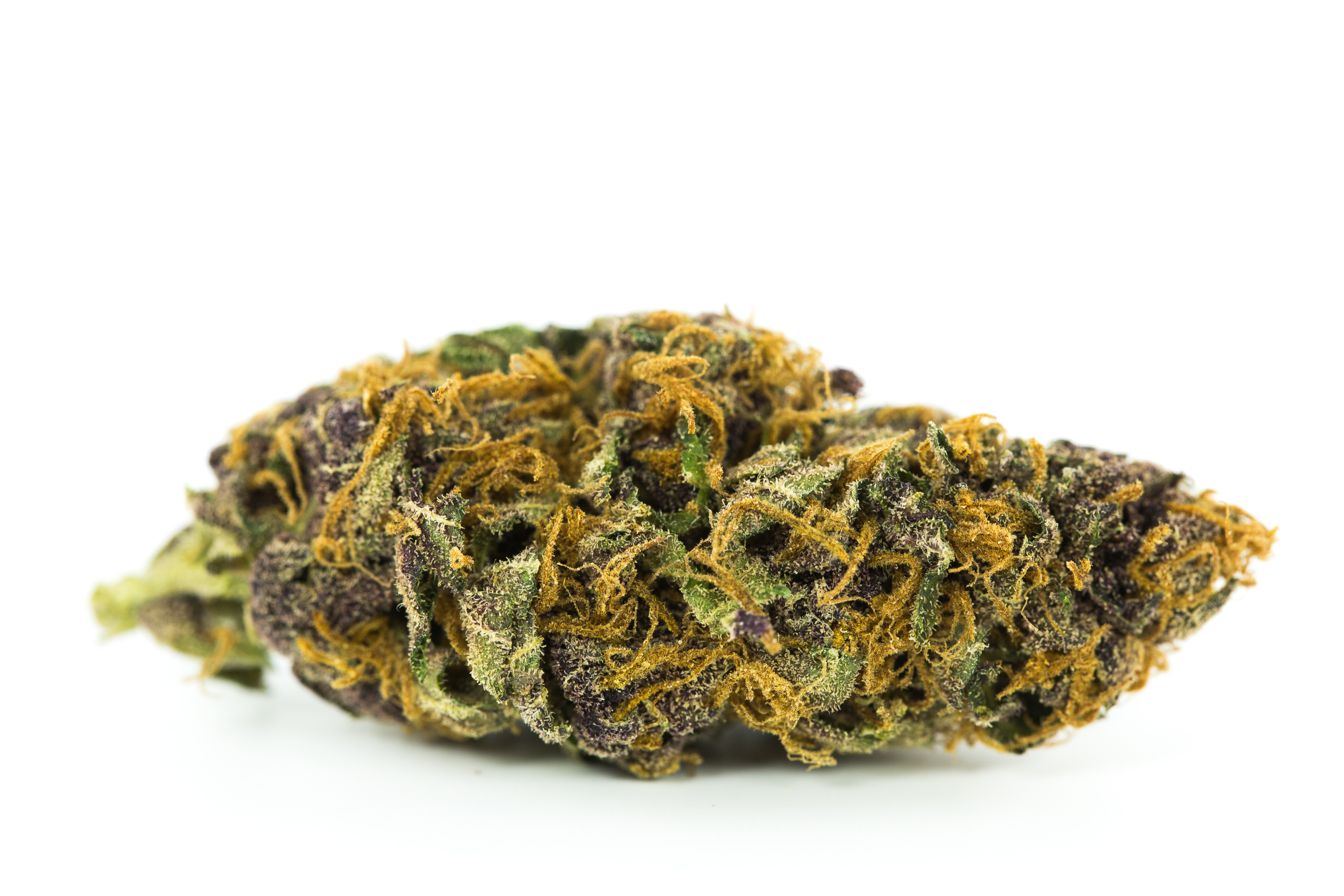 Purple Space Cookies Marijuana Strain Weed and Books: 5 Best Strains For Higher Learning