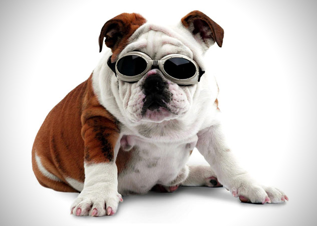 Doggles Dog Goggles (2)