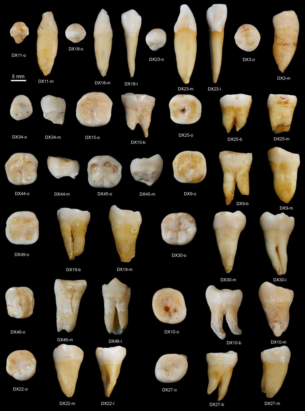 Ancient Chinese Teeth Challenge Human Migration Timeline