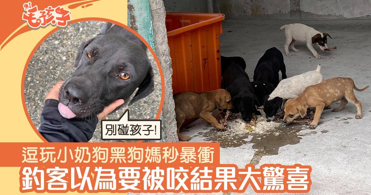 釣客買乾糧餵流浪小狗 黑狗媽秒暴衝 以為要被咬結果大驚喜 香港01 寵物