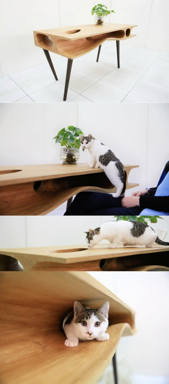 13 Cat lovers desk