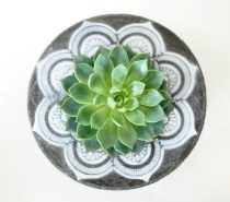 concrete-succulent-planters-210x185 Product Of The Week: Beautiful Bent Wood Sculpture Planters Upholstery in Victoria