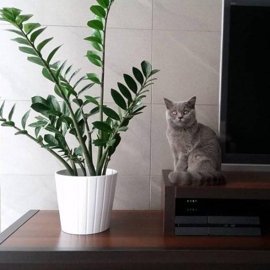 Zamioculcas zamiifolia house plant inspiration