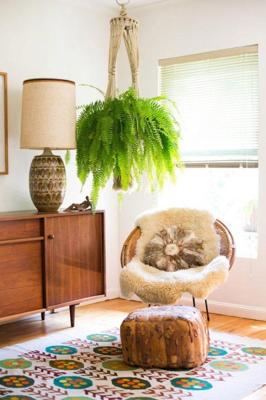 best indoor plants Nephrolepis exaltata fern