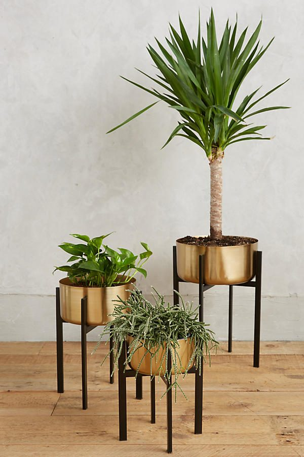 HOME DESIGNING: 42 Unique, Decorative Plant Stands For ... on House Plant Stand Ideas  id=33509