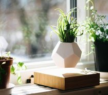 floating-levitating-pot-for-plants-210x185 Product Of The Week: Beautiful Bent Wood Sculpture Planters Upholstery in Victoria