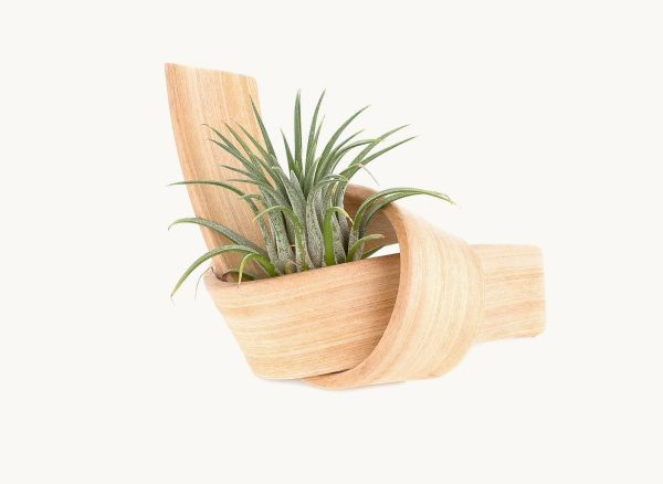 air-plant-modern-holder-wooden-600x438 Product Of The Week: Beautiful Bent Wood Sculpture Planters Upholstery in Victoria