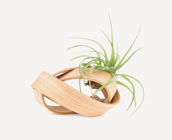 modern-wooden-air-plant-holder-for-sale-600x488 Product Of The Week: Beautiful Bent Wood Sculpture Planters Upholstery in Victoria