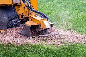 2021 stump grinder rental cost tree