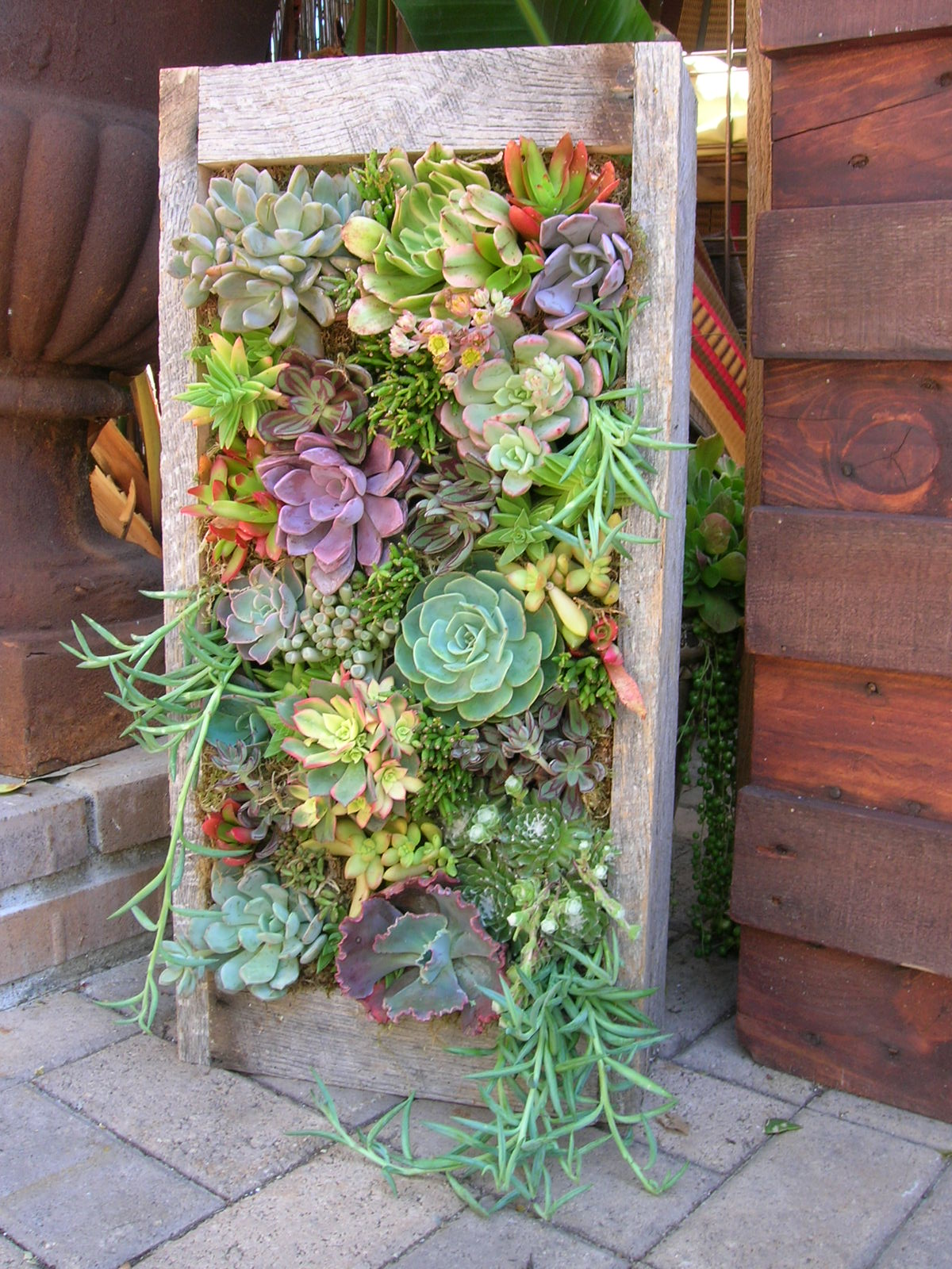 50 Best Succulent Garden Ideas for 2017 on Tree Planting Ideas For Backyard id=98307
