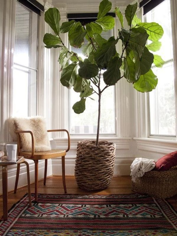 Perfect Indoor Plants