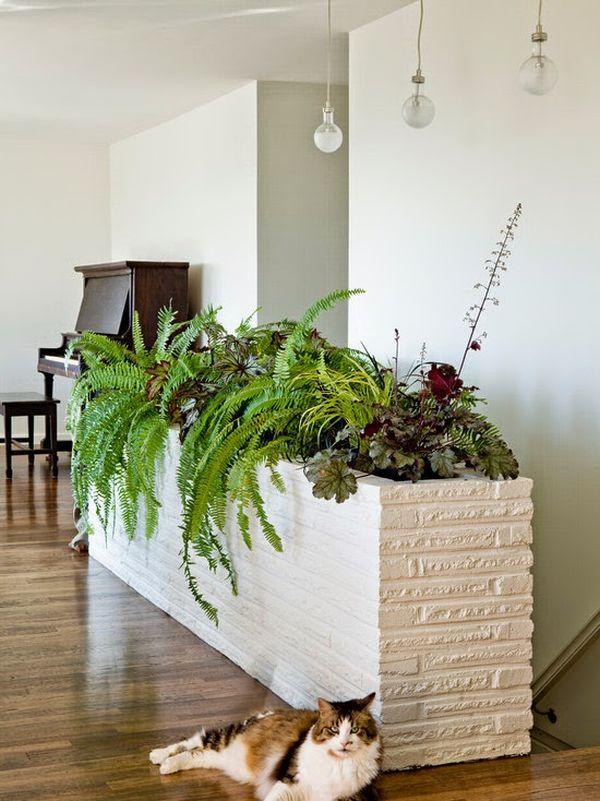 Indoor Plants Large