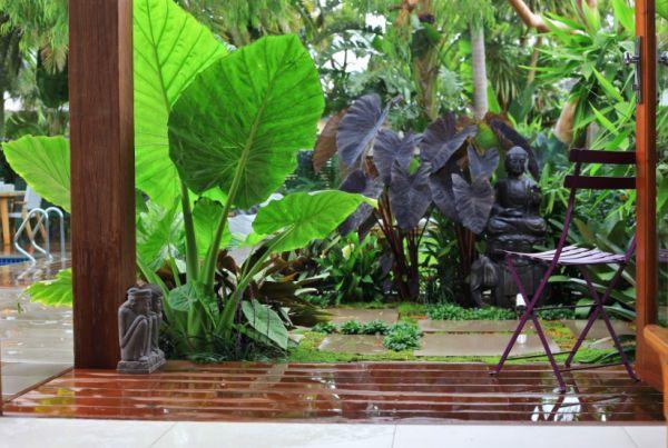 Come creare un giardino tropicale guida giardino - Piante esotiche da giardino ...