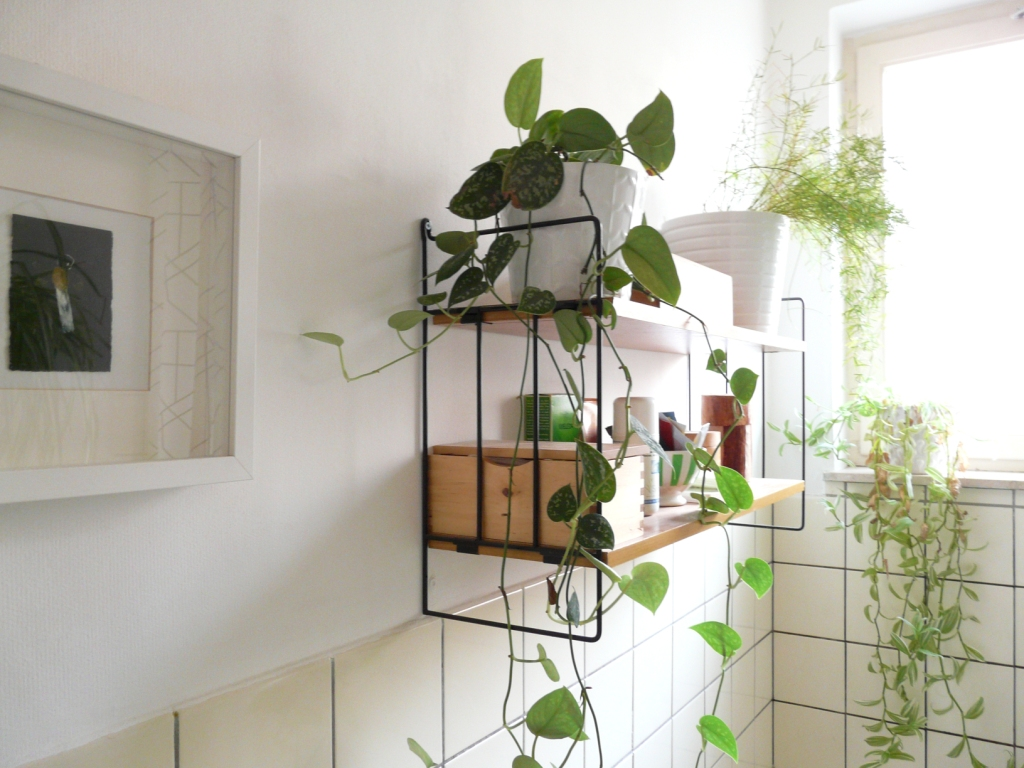 Indoor Plants Air Quality