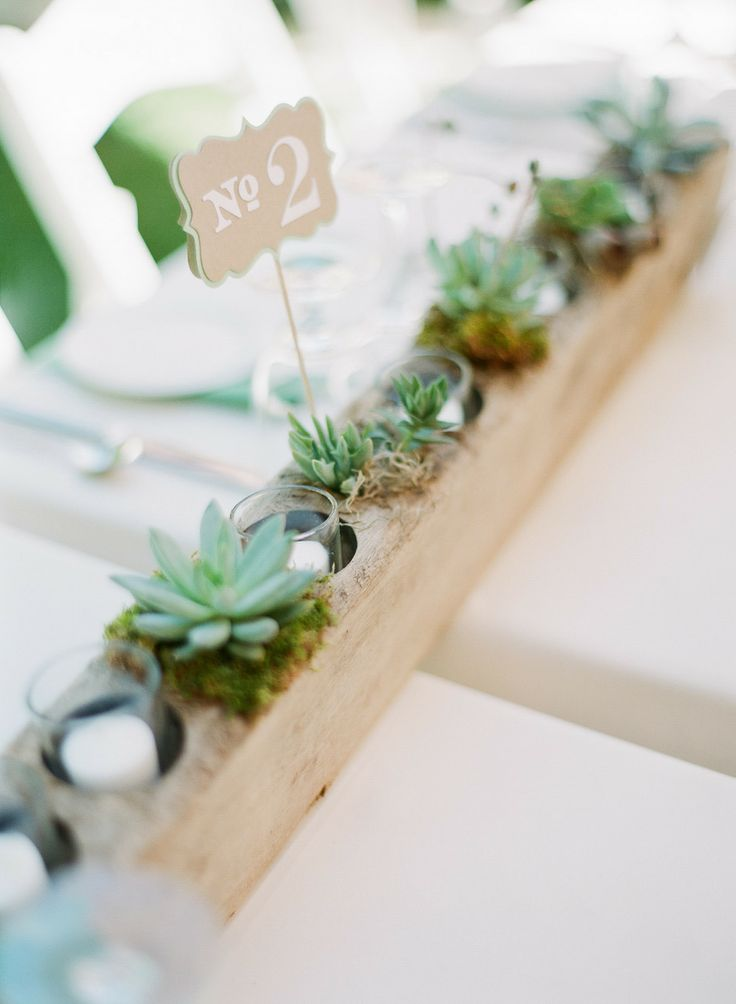 Plants Succulent Mini
