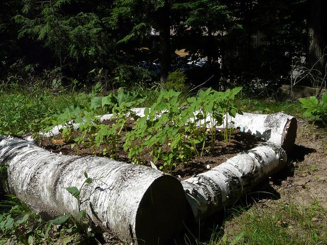 Raised Garden Galvanized Steel