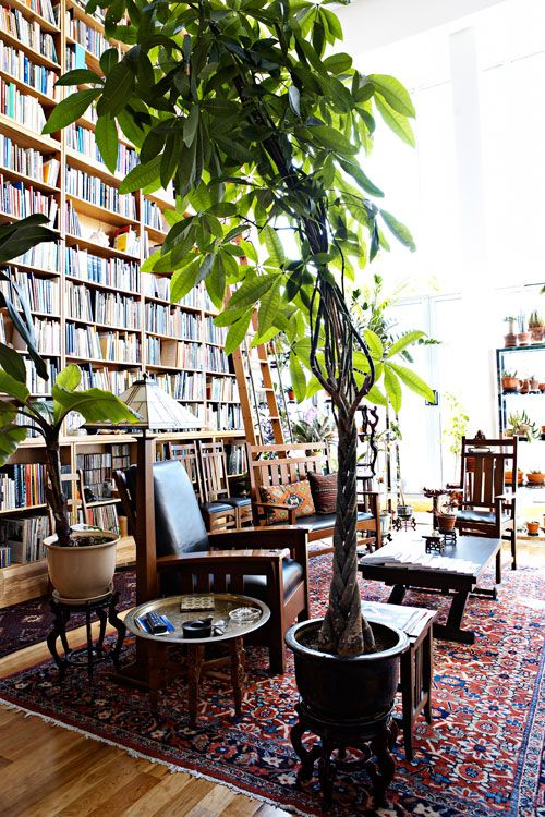 How To Decorate With Tall Indoor Plants