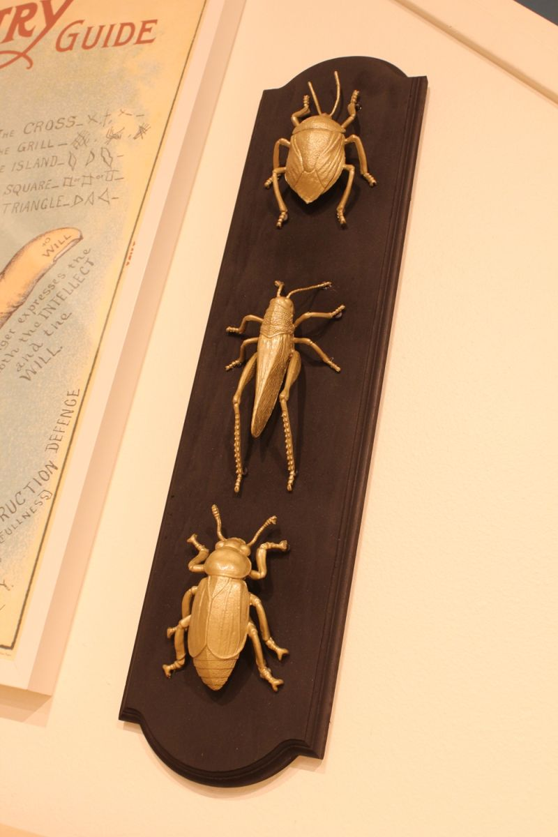 DIY Insect Taxidermy- insects are preaty big