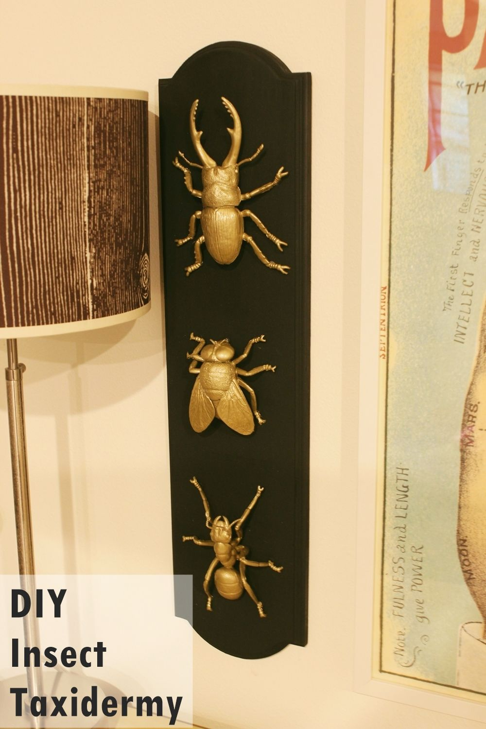 DIY Insect Taxidermy