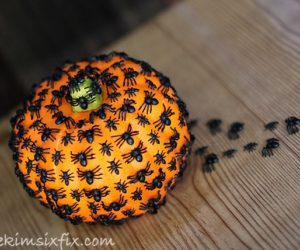 Bugs and spider pumpkin