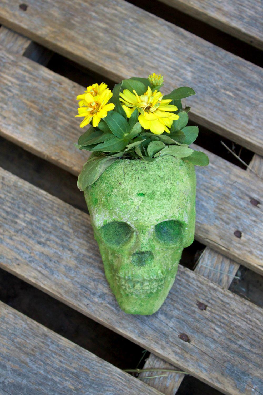 cement-skull-planter-planter