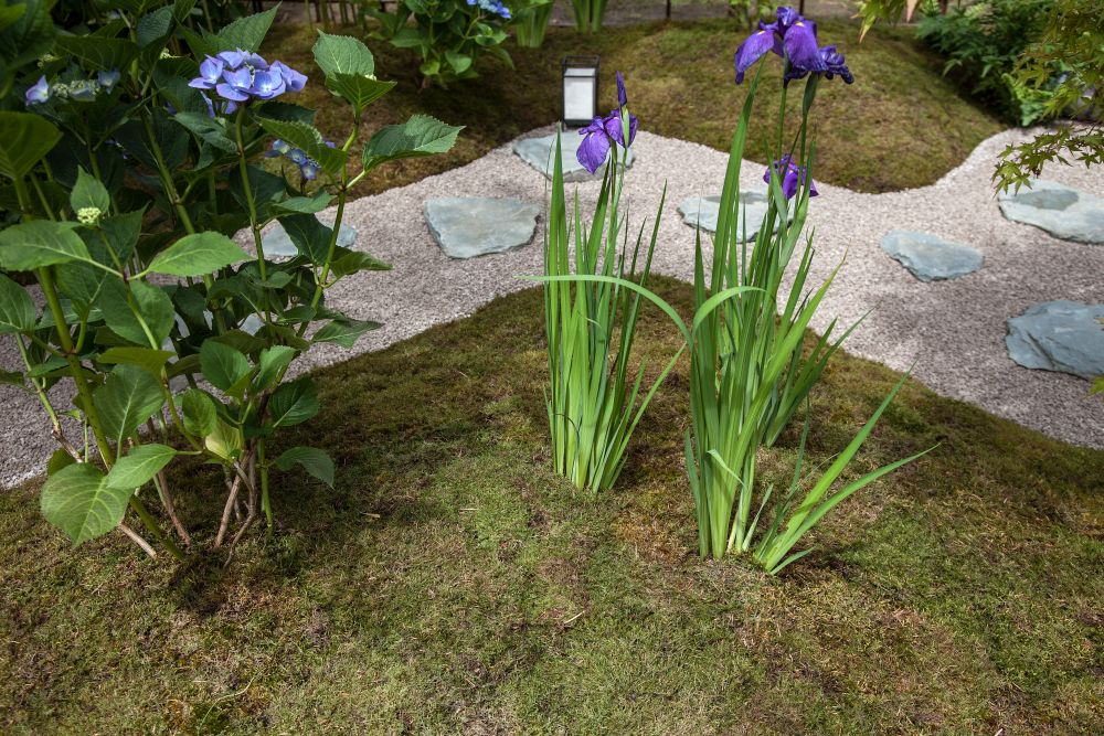 Gravel backyard pathway