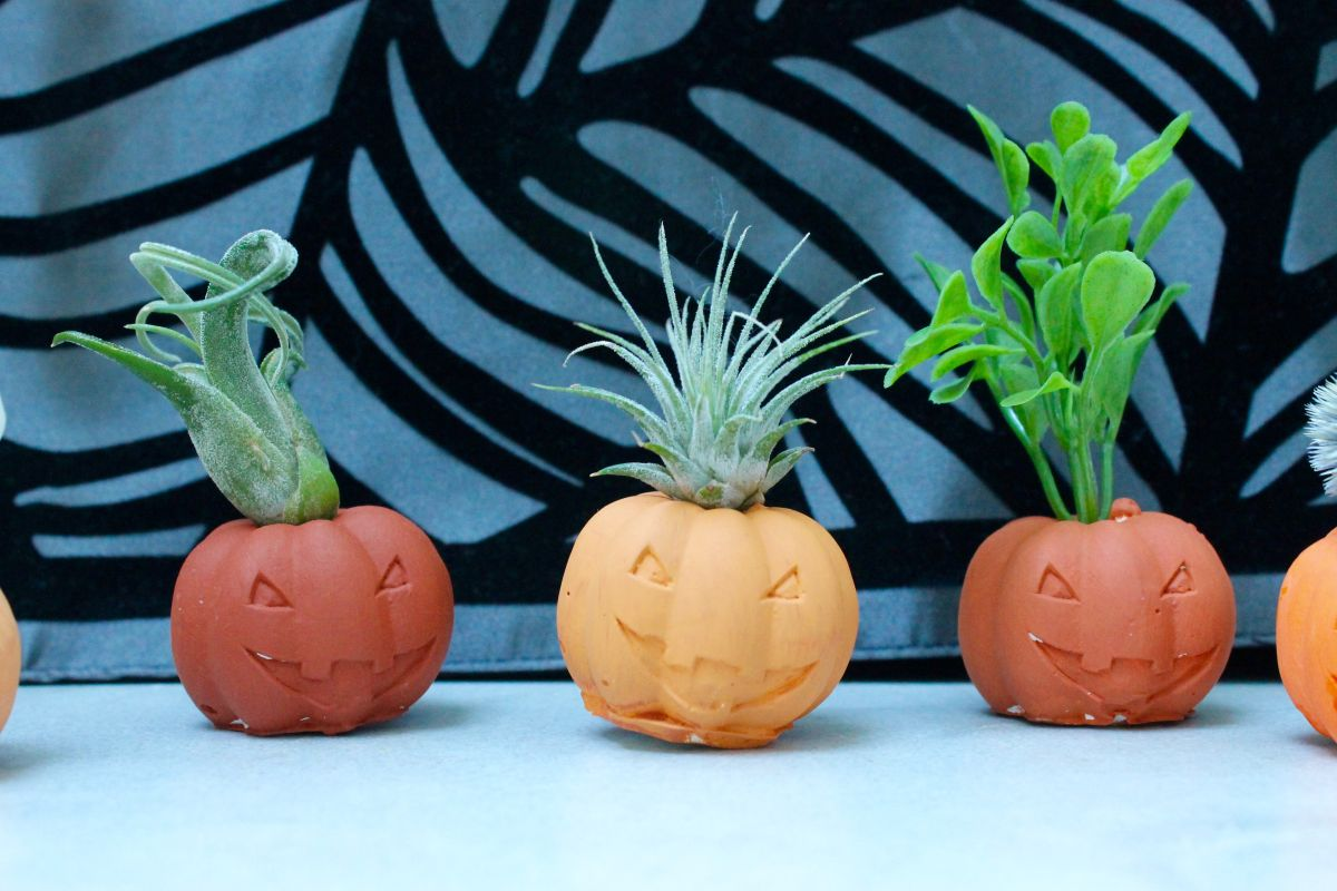 Halloween Pumpkin Air Plant Holders DIY