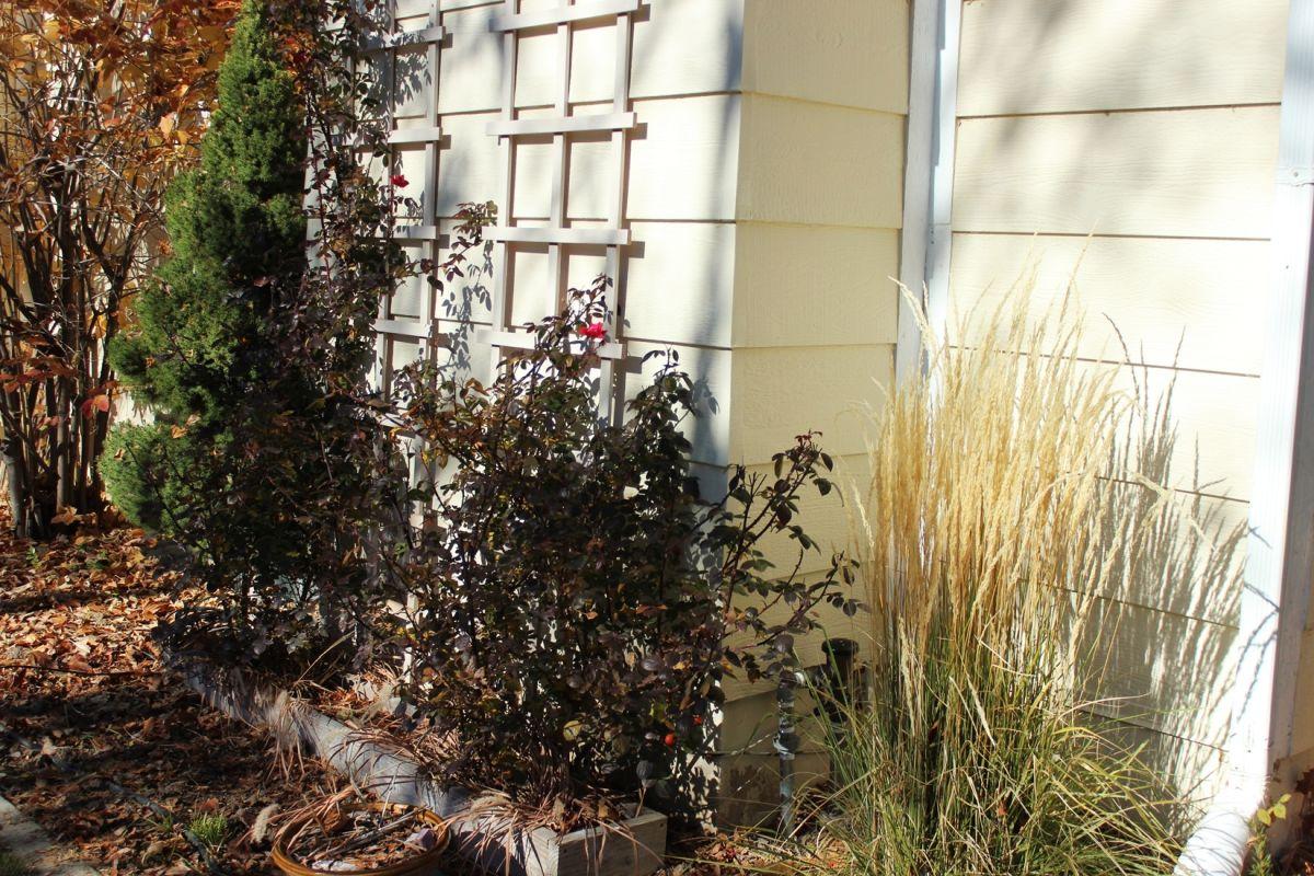 Curb Appeal - hide ugly things in backyard