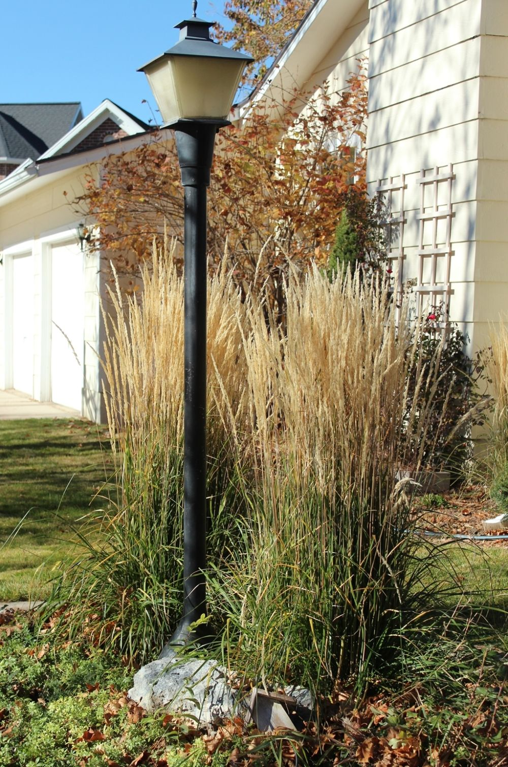 Curb Appeal - landscape plants