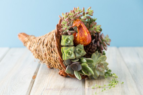 Succulent cornucopia thanksgiving centerpiece