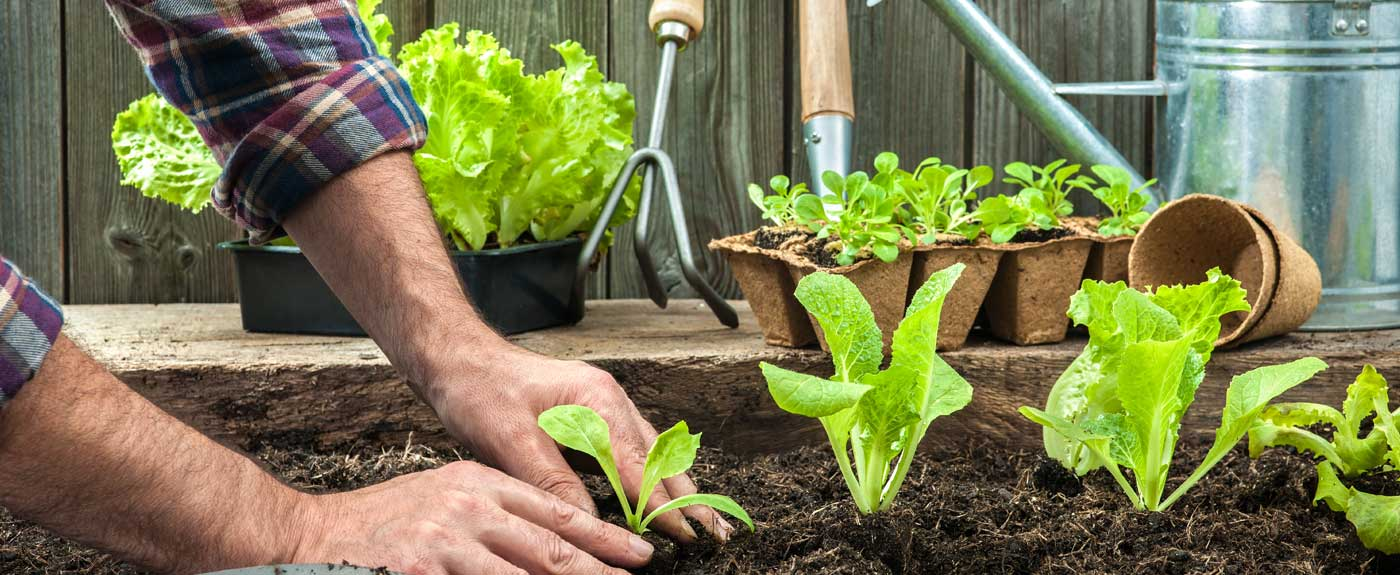 2020 Average Cost of a Gardener (with Local Prices ... on Gardening  id=74741