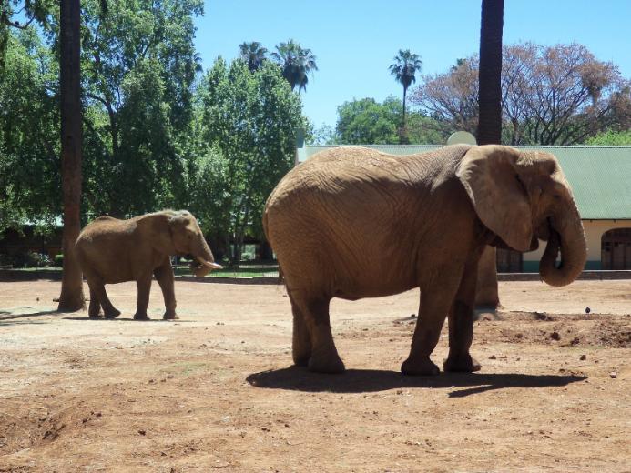 حديقة الحمراء للحيوانات AL-hamraa park