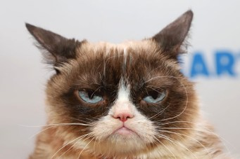 Grumpy Cat, The Most Famous Cat On The Internet, Is Dead