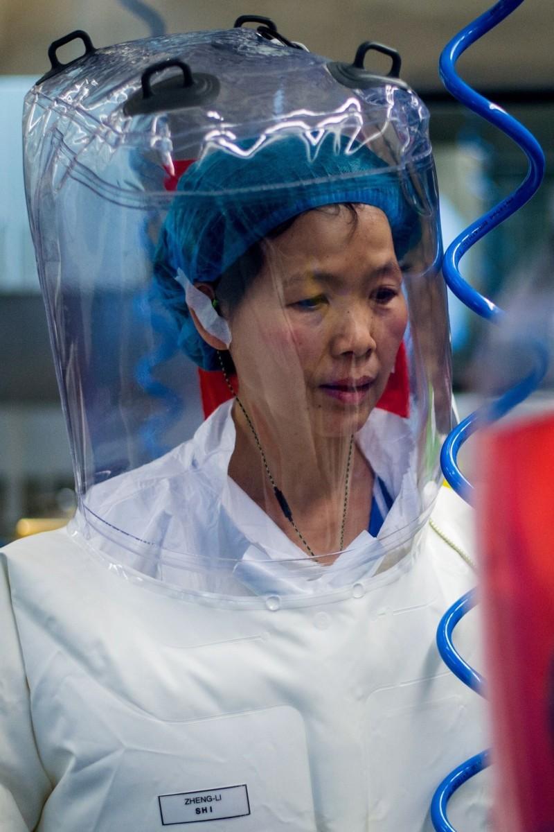 Coronavirus: Chinese virologist Shi Zhengli publishes new paper on pathogen's evolution | South China Morning Post