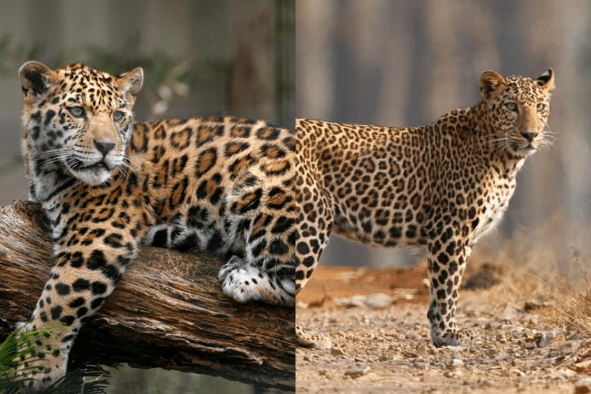 7 Pasang Hewan yang Terlihat Seperti Kembar, padahal Sebenarnya Tidak