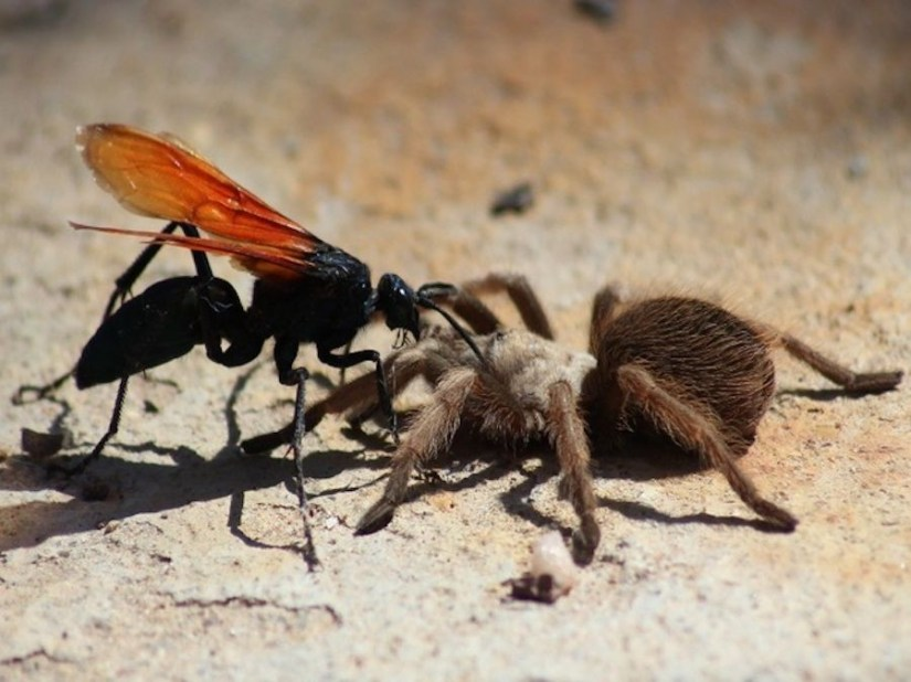 Great!  These are 10 Giant Insects Today