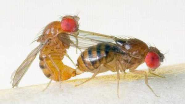 Male Harassment of Sexy Female Flies Can Damage the Gene
