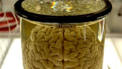 Scientists Need Your Brains, No Seriously